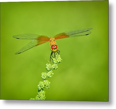 Metal Print featuring the photograph Little Bugger by Greg Norrell