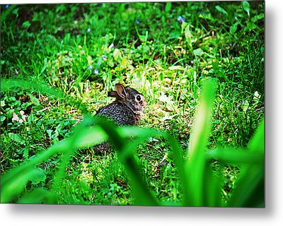 Little Bunny Fufu Metal Print by Mark Russell
