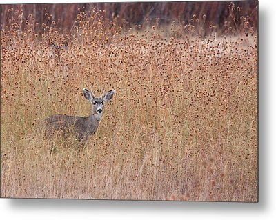 Little Deer Metal Print by Ruth Jolly