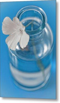 Little Flower In A Vase Metal Print by Frank Tschakert