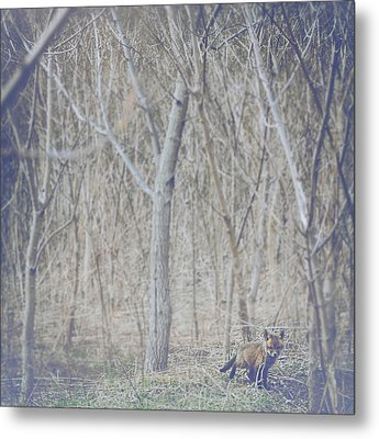 Little Fox In The Woods 2 Metal Print by Carrie Ann Grippo-Pike