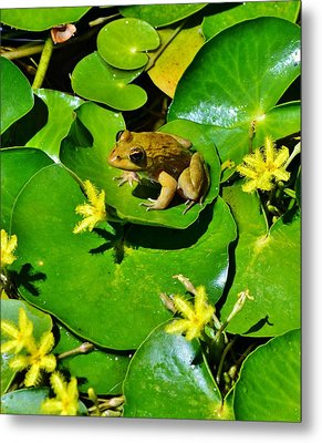 Little Frog Metal Print