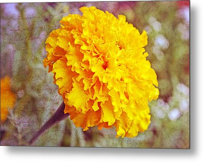 Metal Print featuring the photograph Little Golden  Marigold by Kay Novy