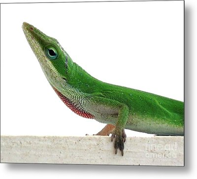 Metal Print featuring the photograph Little Green by Sally Simon