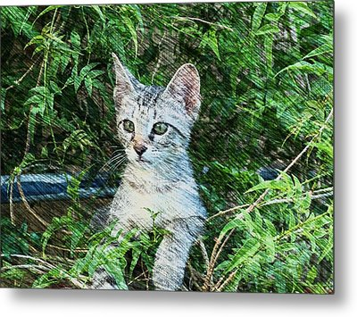 Little Kitten Metal Print