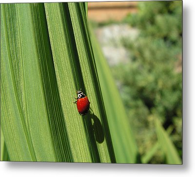 Metal Print featuring the photograph Ladybird by Cheryl Hoyle