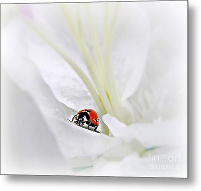 Little Ladybug Metal Print by Morag Bates