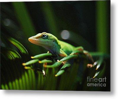 Little Lizard On A Sago Palm Metal Print by Kathy Baccari