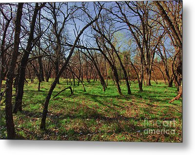 Little Oaks Metal Print by David Taylor