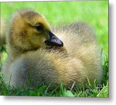 Little One Metal Print by Kathleen Struckle
