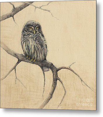 Little Owl Metal Print by Lori  McNee