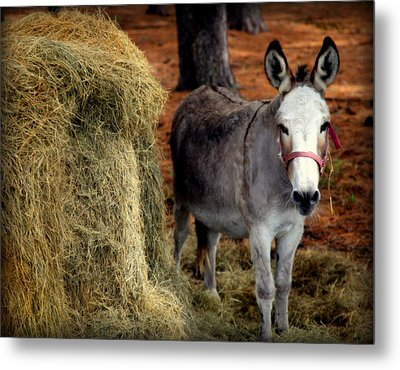 Little Pedro Metal Print by Karen Wiles