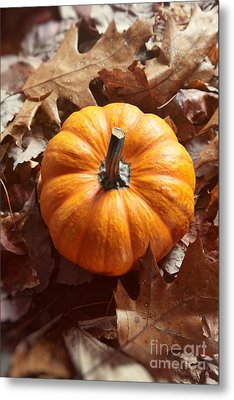 Metal Print featuring the photograph Little Pumpkin In A Bunch Of Leaves by Sandra Cunningham