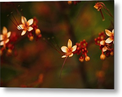 Little Red Flowers Metal Print by Bradley R Youngberg