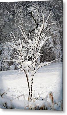 Little Snow Tree Metal Print by Karen Adams