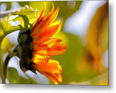 Little Sunshine Metal Print by Katherine White
