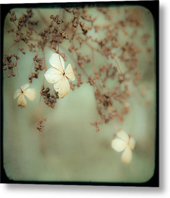 Little White Flowers - Floral - The Little Things In Life Metal Print by Gary Heller