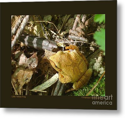 Little Yellow Frog Metal Print by Patricia Overmoyer