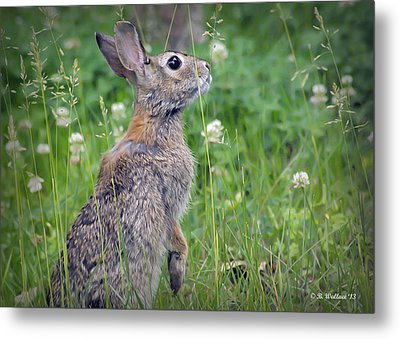 Live In Clover Metal Print by Brian Wallace
