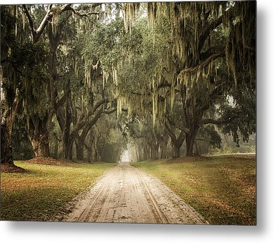 Live Oak Allee' On A Foggy Morn Metal Print by Sandra Anderson