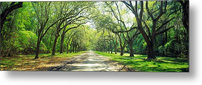 Live Oaks And Spanish Moss Wormsloe Metal Print by Panoramic Images