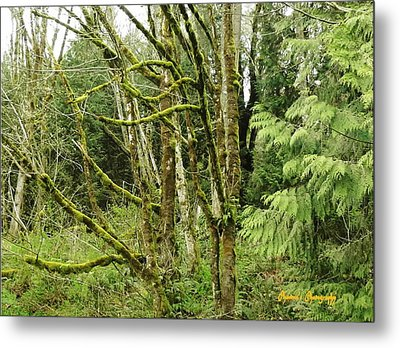 Metal Print featuring the photograph Livid Moss by Sadie Reneau
