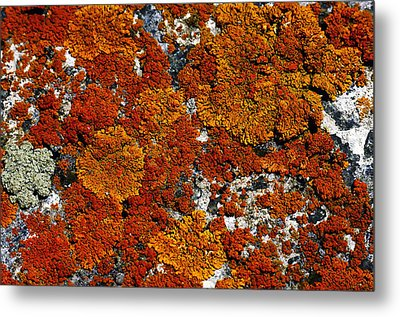 Living Rock  Metal Print by The Forests Edge Photography - Diane Sandoval
