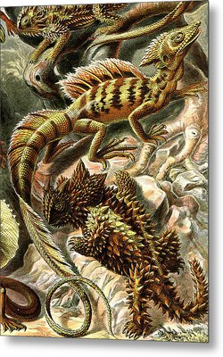 Lizard Detail II Metal Print by Unknown