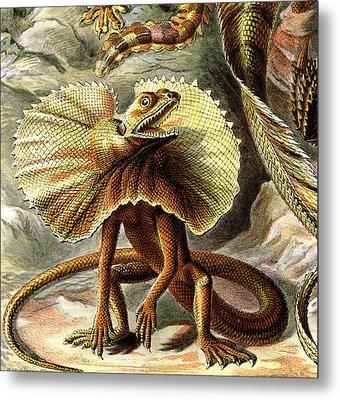 Lizard Detail IIi Metal Print by Unknown