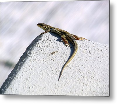Lizard Metal Print by Ramona Matei