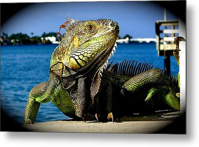 Lizard Sunbathing In Miami Metal Print by Monique Wegmueller