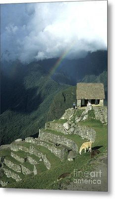 Llama And Rainbow At Machu Picchu Metal Print by James Brunker