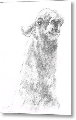 Metal Print featuring the drawing Llama Close Up by Andrew Gillette