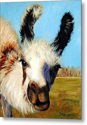 Llama In Afternoon Sunlight Metal Print by Dottie Dracos