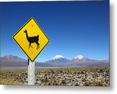 Llamas Crossing Sign Metal Print by James Brunker