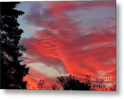 Lobster Sky Metal Print by Barbara Griffin