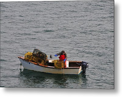 Lobsterman Cleans Trap Metal Print by Mike Martin