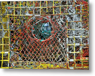Lobster's Point Of View Metal Print by Mike Martin