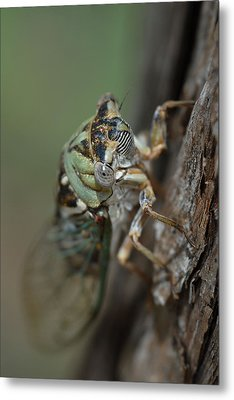 Metal Print featuring the photograph Locust by Susan D Moody