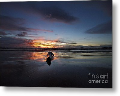 Metal Print featuring the photograph Logged Out  by Gary Bridger
