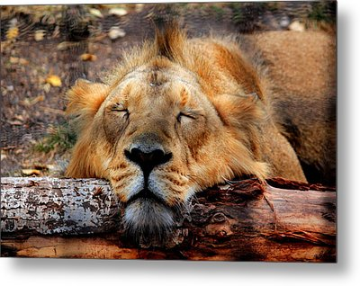 Logged Out Metal Print by Larry Trupp