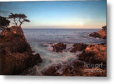 Lone Cyprus Pebble Beach Metal Print by Mike Reid