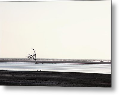 Lone Dead Tree Sustains Nests Of New Life Metal Print