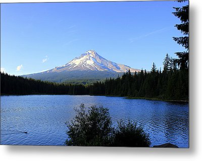Metal Print featuring the photograph Lone Duck by Debra Kaye McKrill