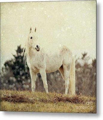 Lone Horse Metal Print by Diane Miller