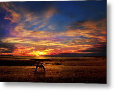 Lone Horse Greenwood County Metal Print by Rod Seel