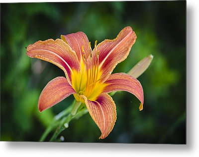 Lone Lily Metal Print by Bradley Clay