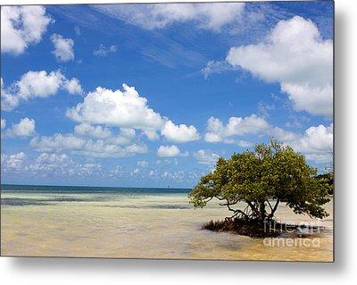 Lone Mangrove Tree Florida Keys Metal Print