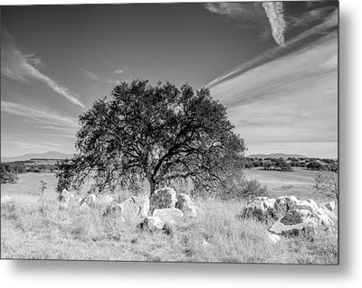 Metal Print featuring the photograph Lone Oak by Robert  Aycock