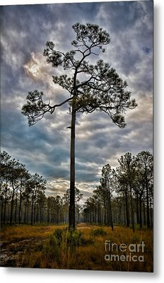 Lone Pine Metal Print by Henry Kowalski